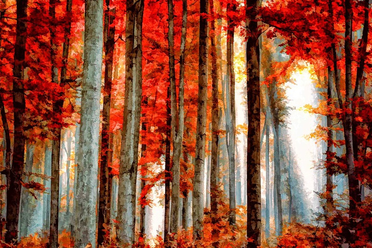 Red Woods - Image 0