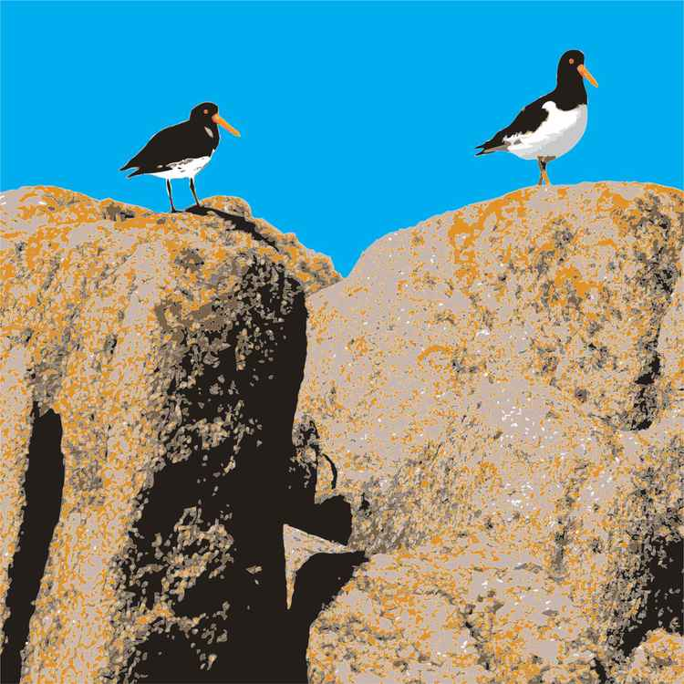 OYSTER CATCHERS -
