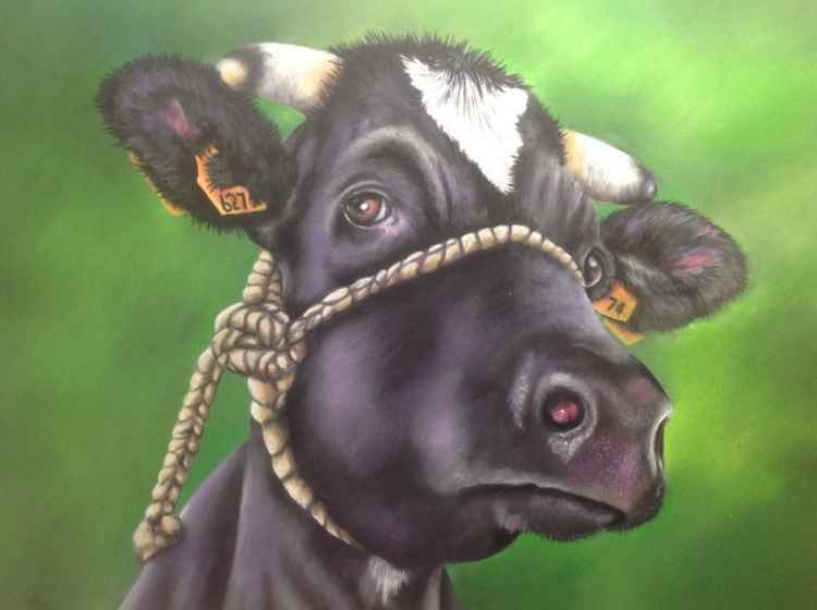 Thoughtful Cow -