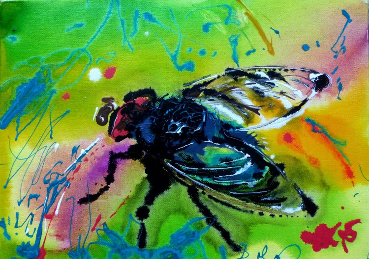 a fly basking in the sun - Image 0