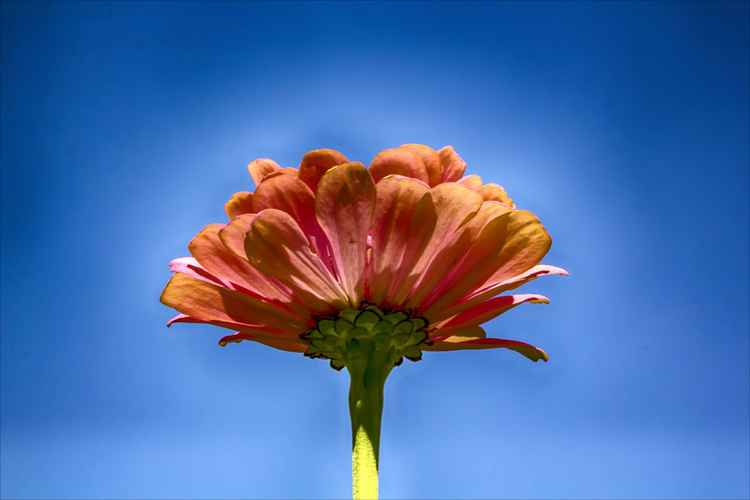 Flower and Sky -