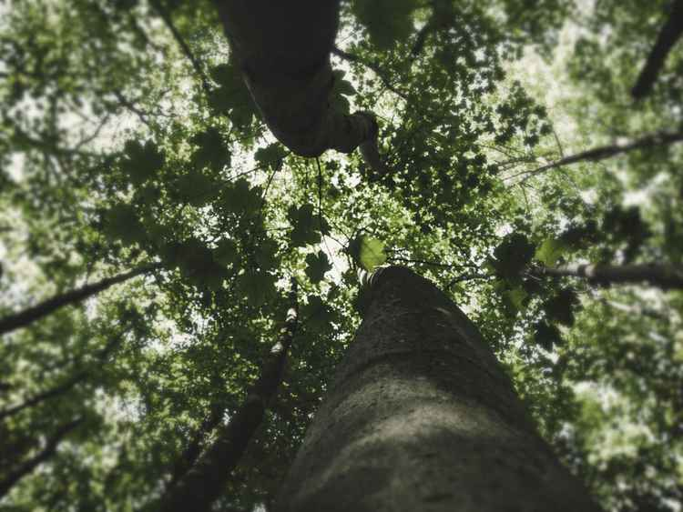 Treeview #4 -