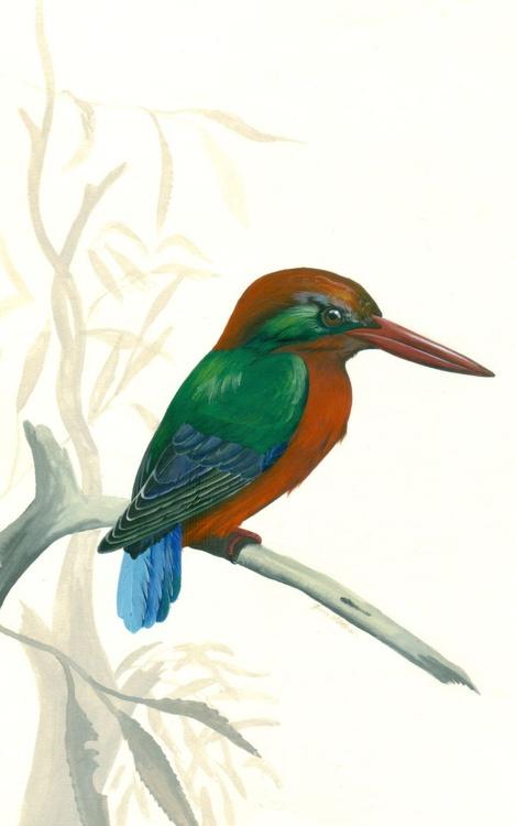 Miyako Kingfisher - Image 0