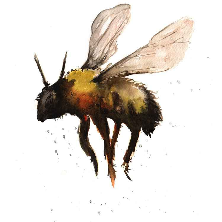 Bee 1 -