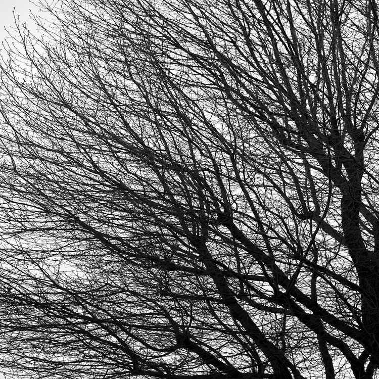 Bare Tree Left -