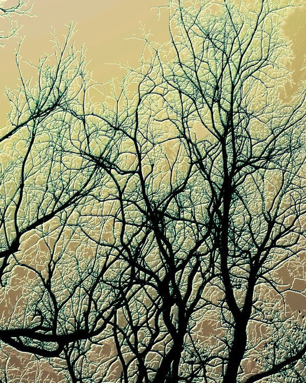 Winterland Trees 2016 - Image 0