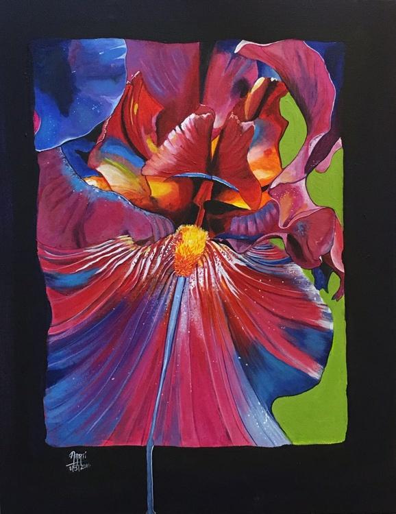 Iris 2 - Image 0