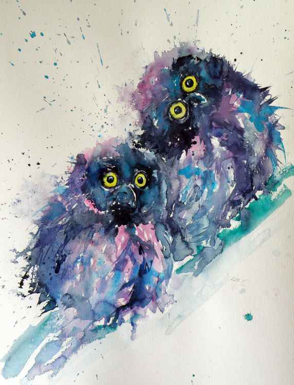Owl chicks -