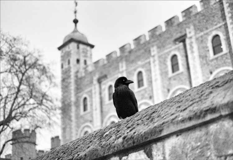 Eye of the Raven - Tower of London