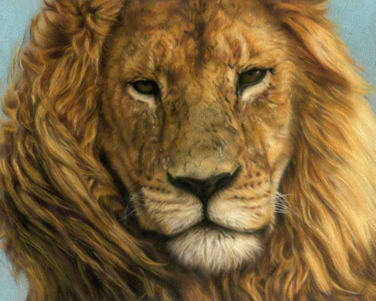 Portrait of a Lion -