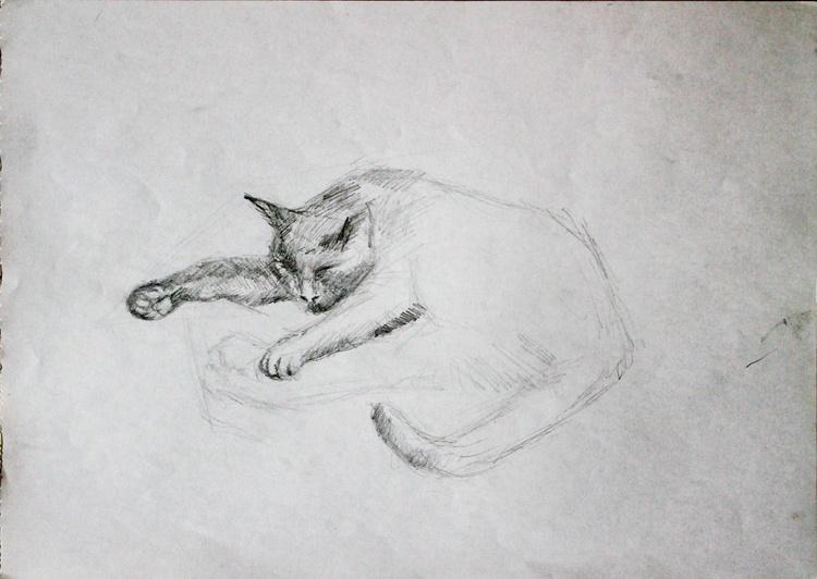 Cat Study 2 - Image 0