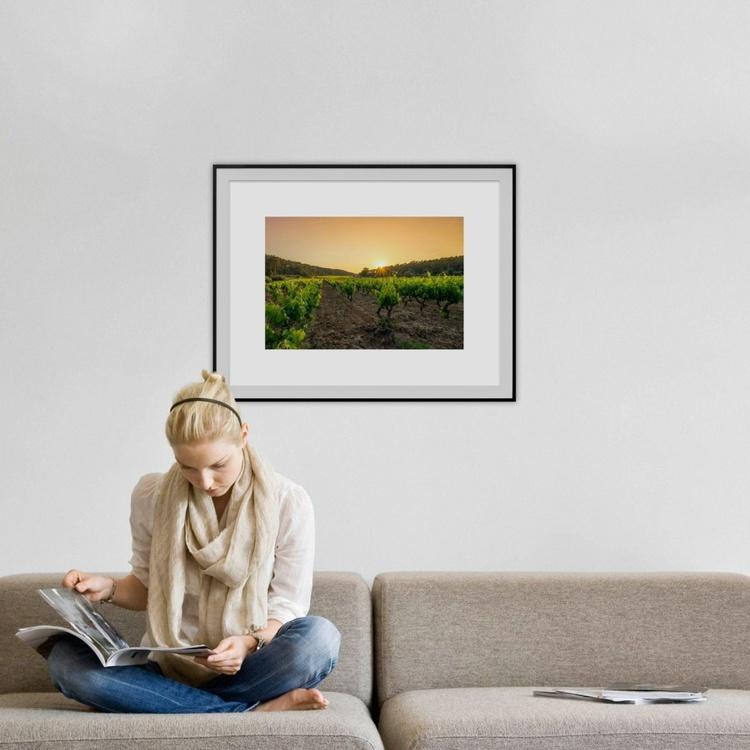 The wine yard - Image 0