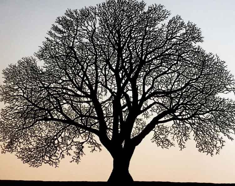 Halshanger Oak