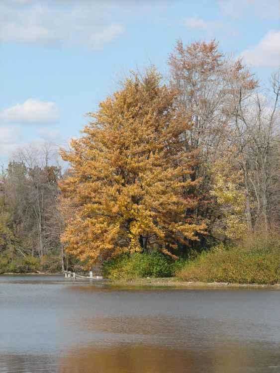 Beautiful  Fall -