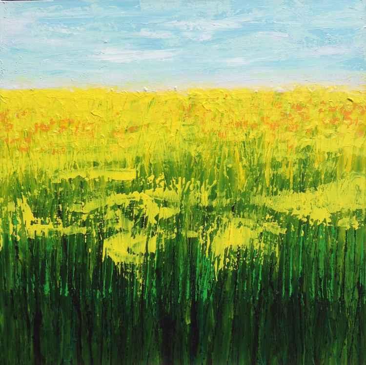 Rapeseed Fields -