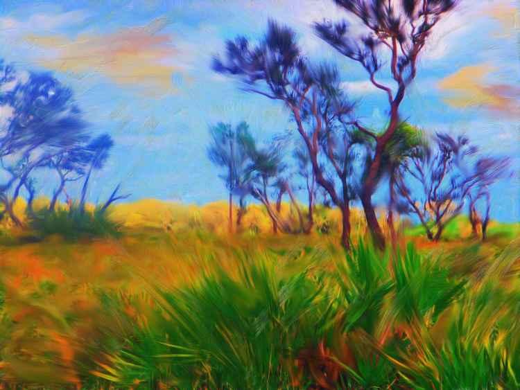 Florida Prairie -