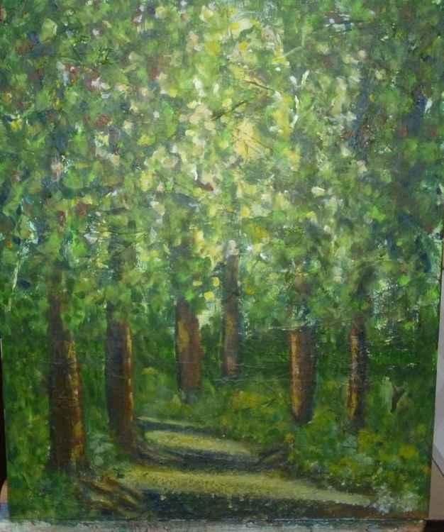 Summer Woodland Walk -