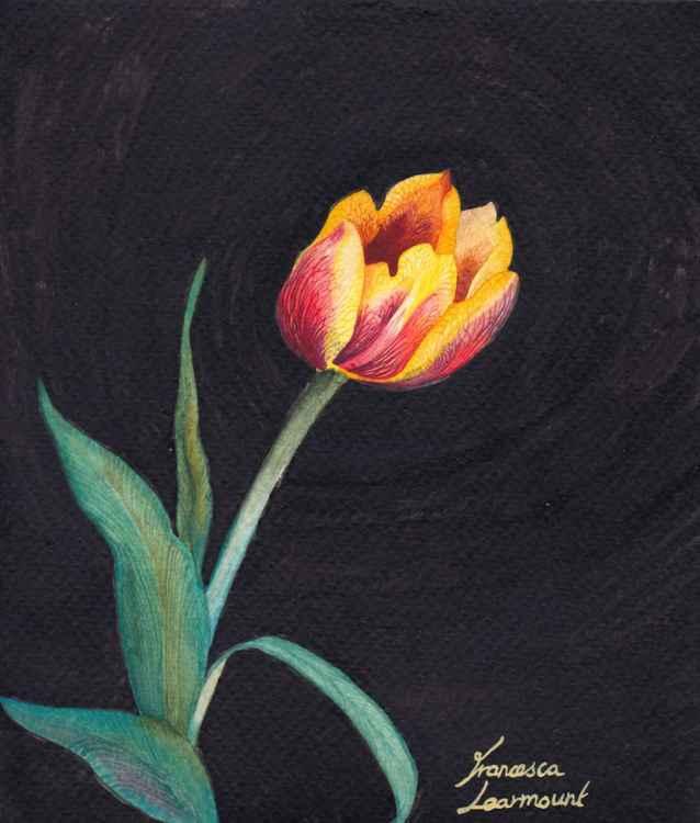 Small Tulip -