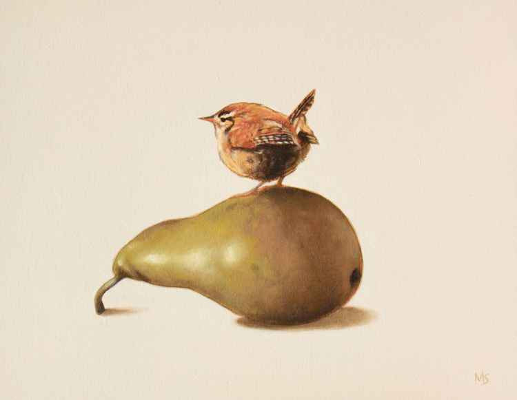 Wren on a pear -