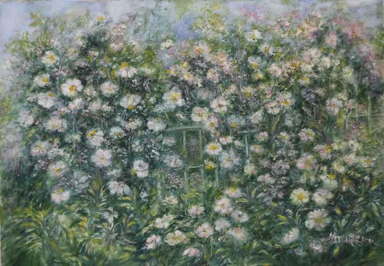 Wildrose -