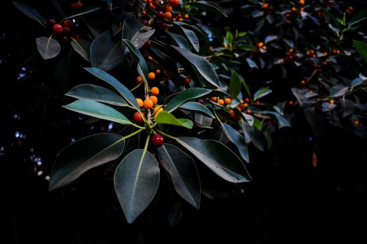 """Orange, Green and Dark"" - Image 0"