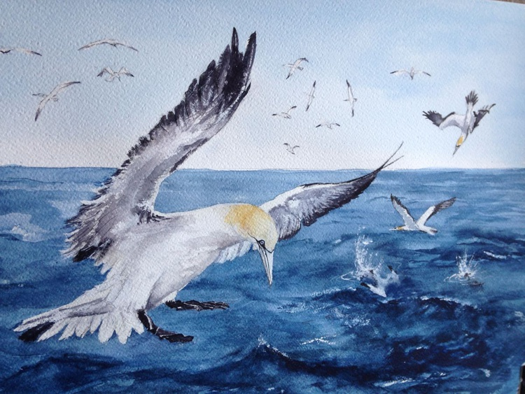 Gannets at Sea - Image 0