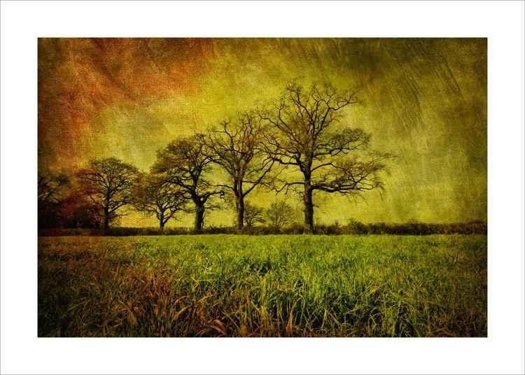 Tree line. -