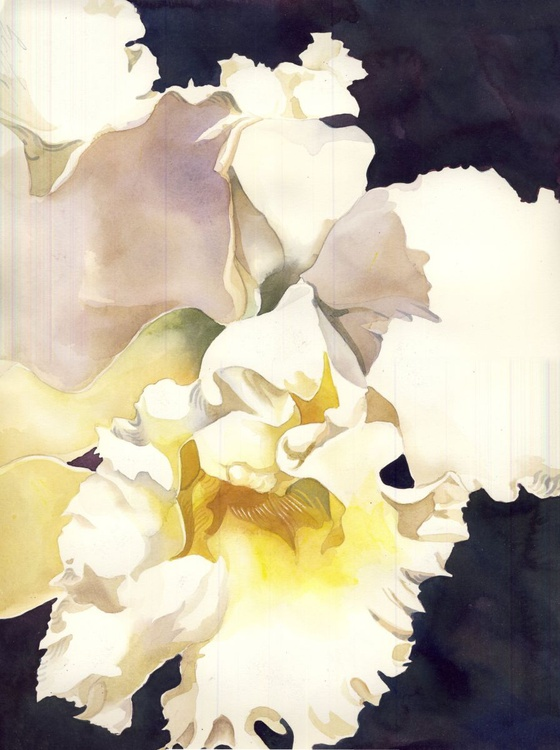 white cattleya orchid - Image 0