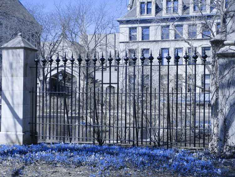 Blue Flowers at Botany Pond, UChicago