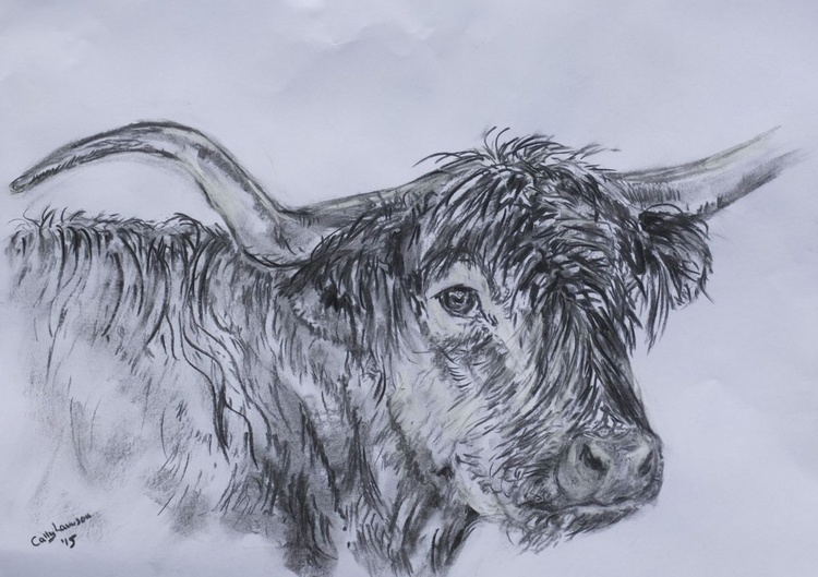 Highland Cow in charcoal - Image 0