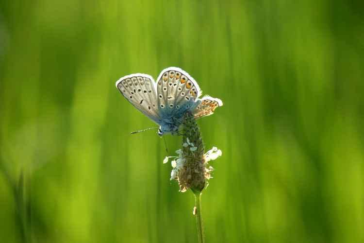 Spread wings -