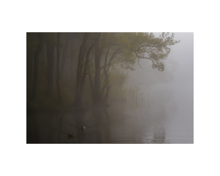 In the mist. - Image 0