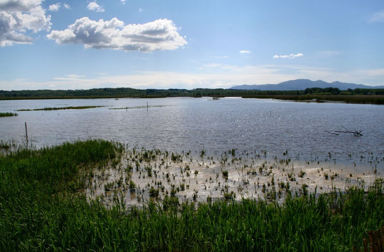 Marsh Land - Image 0