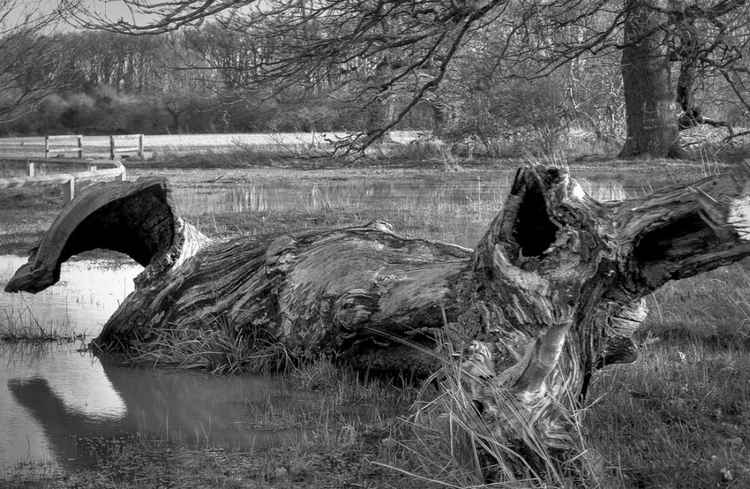 Faces of Nature: Ancient trees 2