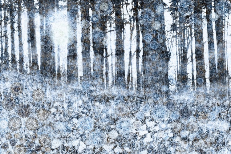 Carpet of Frost (Ltd Edition of only 20 Fine Art Giclee Prints from original artwork.) - Image 0