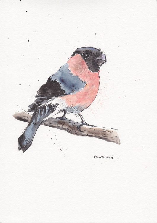 Bullfinch - Daily Bird #53 - Image 0