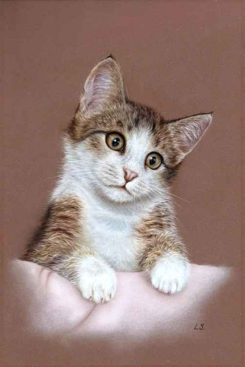 Kitten portrait -
