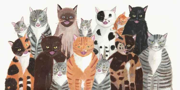 Cat's Chorus -