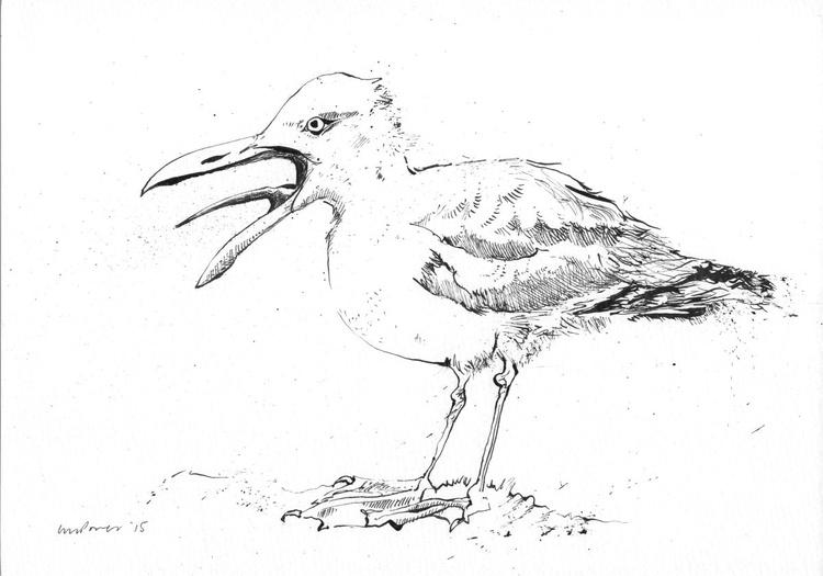 Screeching Seagull - Image 0