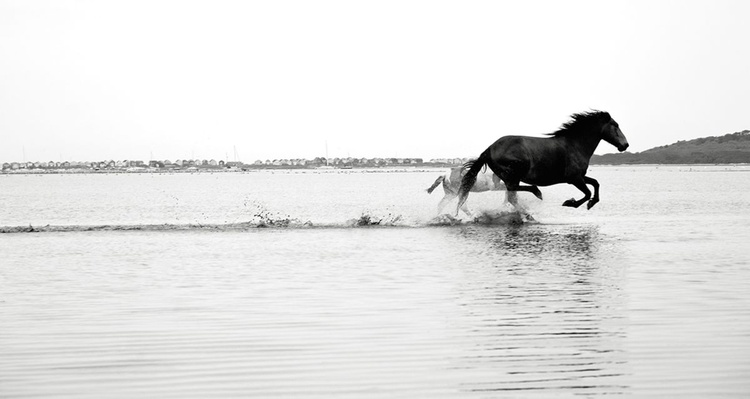 GALLOPING ON WATER - Image 0