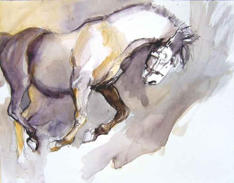 black stallion V -