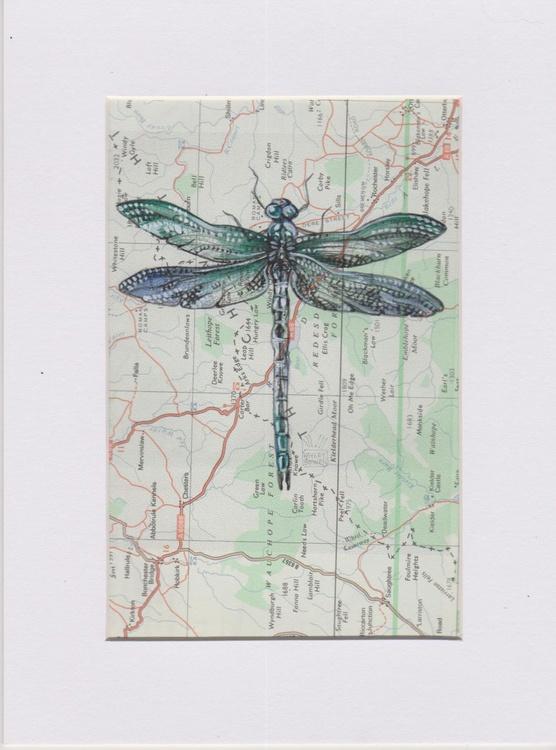 Dragonfly Migration 2 - Image 0