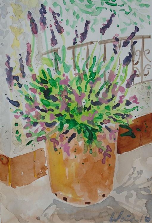 Lavender in Spanish garden - Image 0