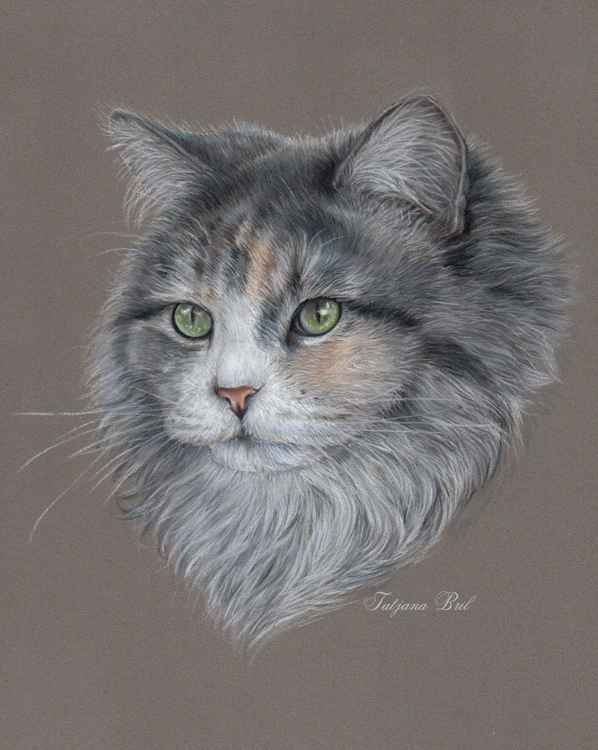 Siberian cat pastel art