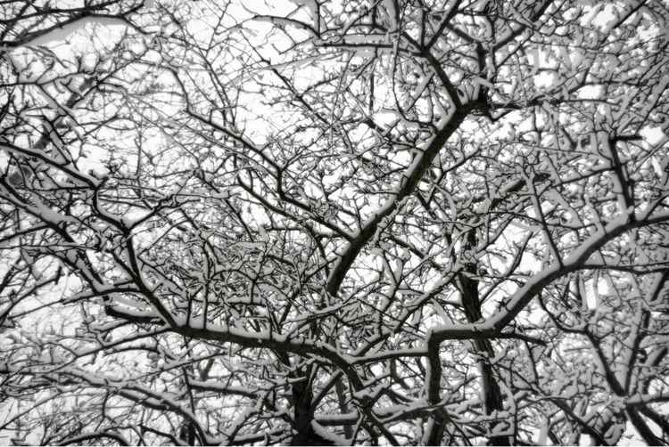 'SNOWY BRANCHES #4' -