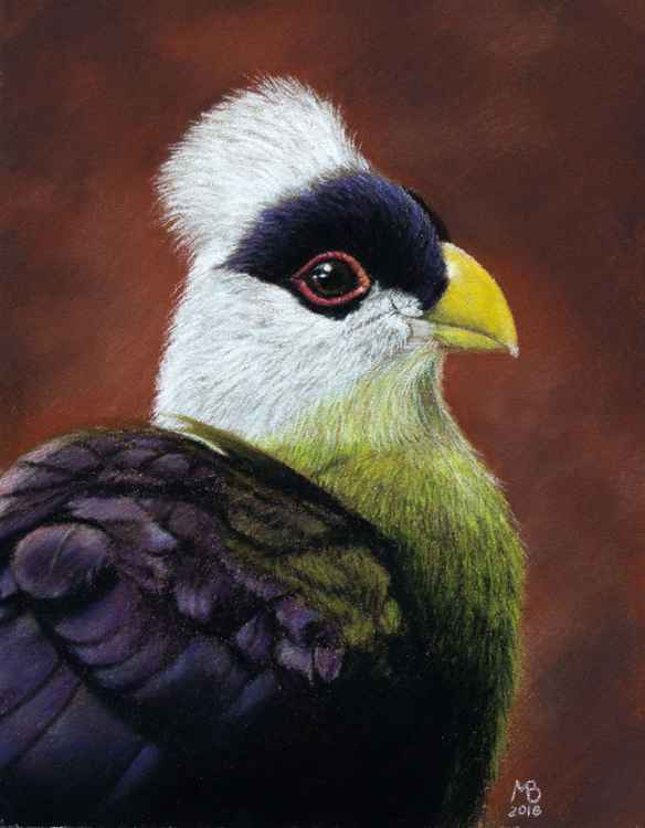 "Original pastel drawing ""White-crested Turaco"""