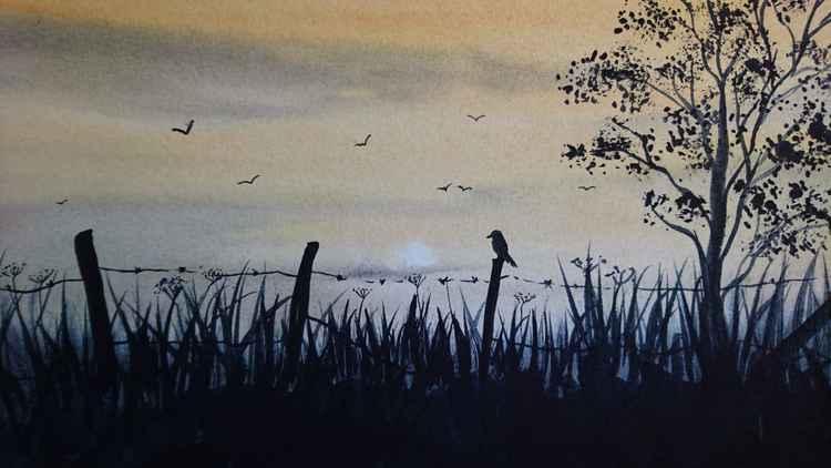 dawn corus