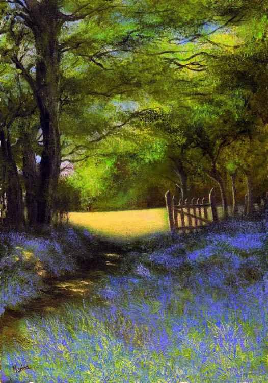 Bluebell Walk -