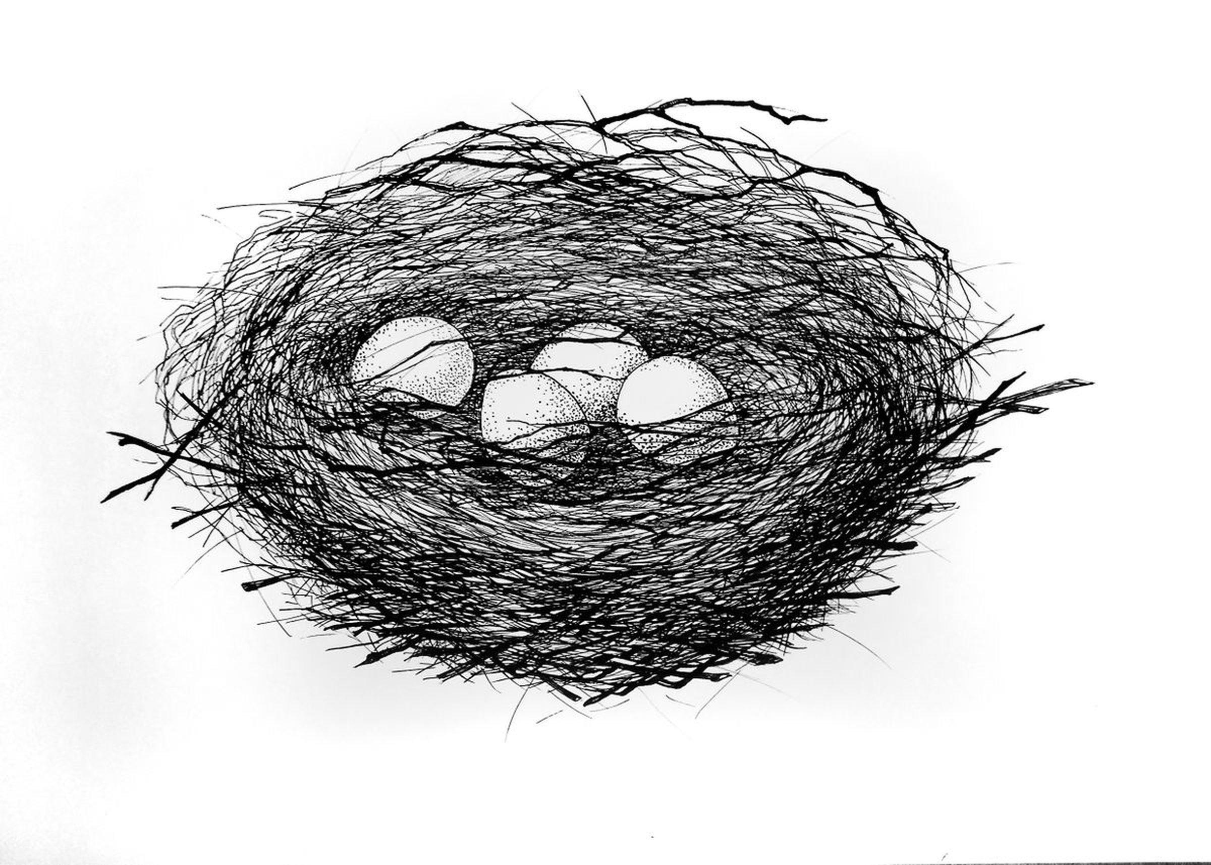 Line Drawing Nest : Nest ink drawing by alice nesterenko artfinder