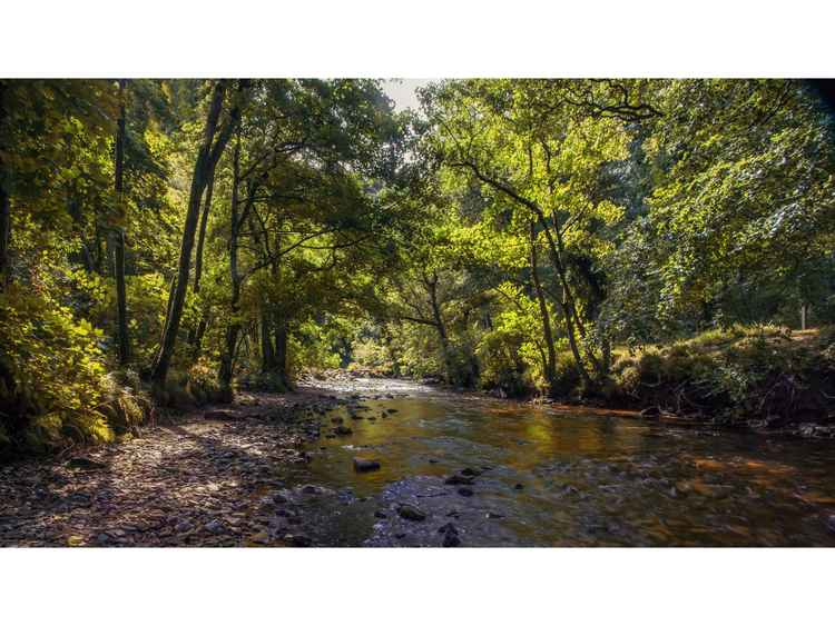 The River Teign -